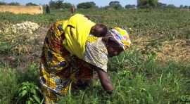 plaidoyer-les-femmes-du-secteur-informel-reclament-un-fonds-de-garantie